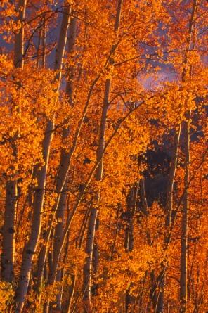 Aspen Bryce Canyon NP