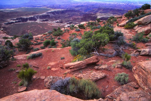 Island in the Sky - Canyonlands NP