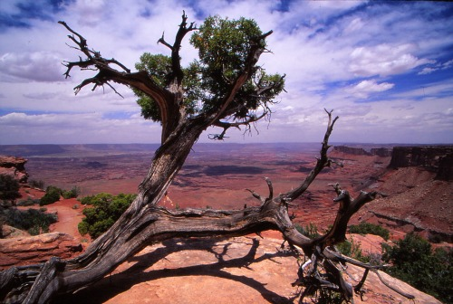 Needles Overlook - Canyonlands NP