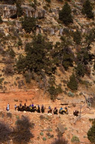 Mule Ride Grand Canyon South Rim