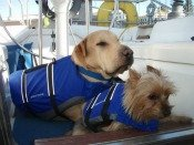 Pet-life-vests-Lake-Powell-Country